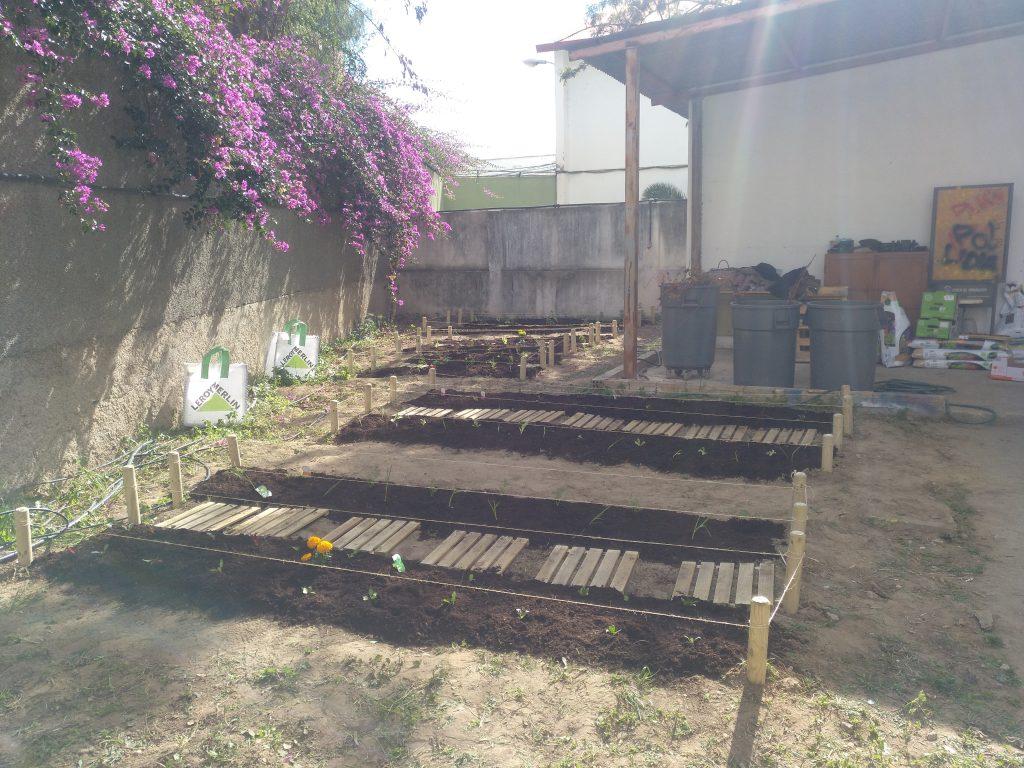 Huerto plantado