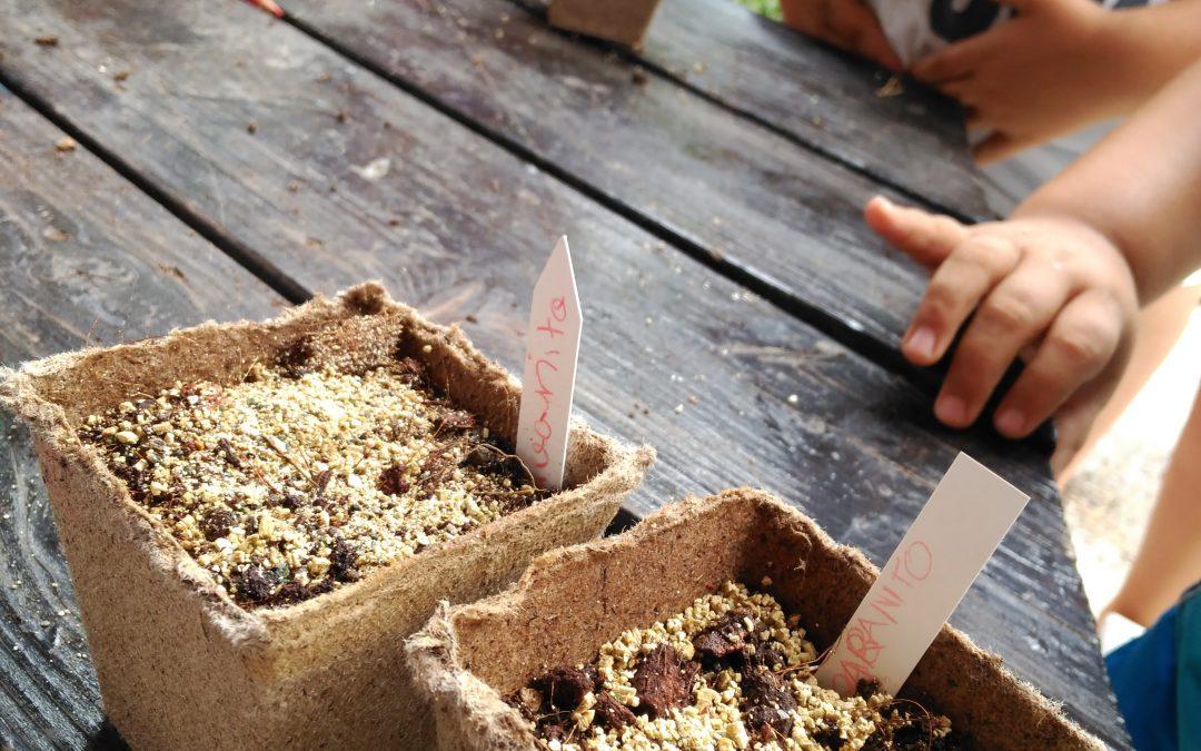 Semilleros de verano