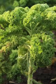 Col Kale
