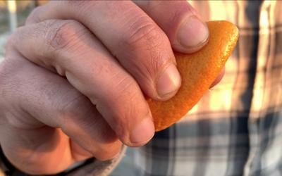 Insecticida Casero con naranja