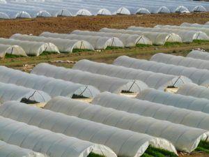 Túnel de cultivo huerto