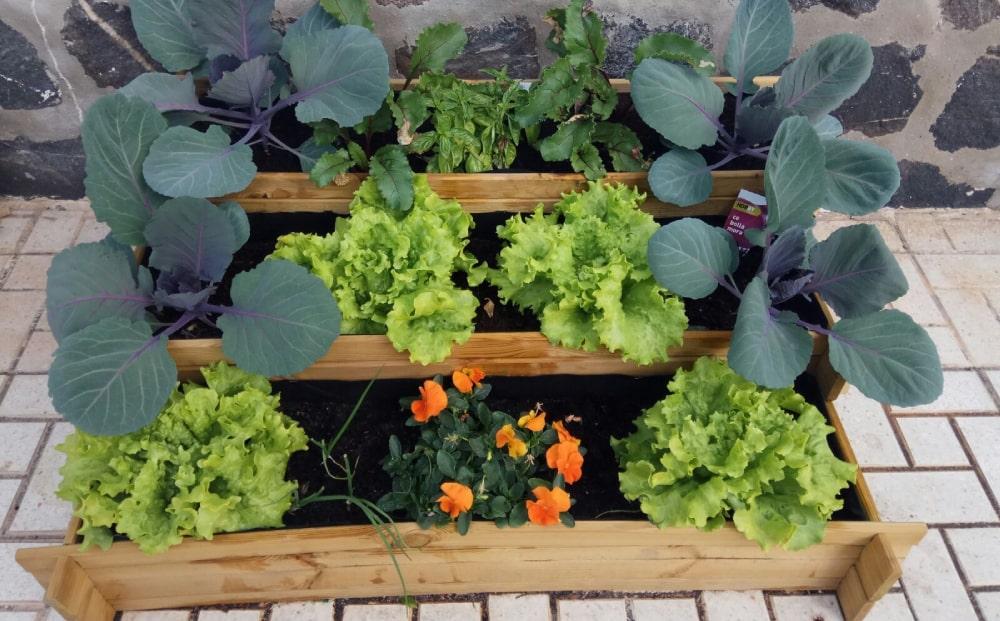 ¿Cómo planificar los bancales de cultivo de tu huerto?