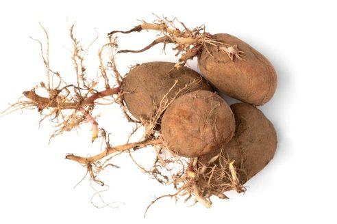 Tubérculo patata